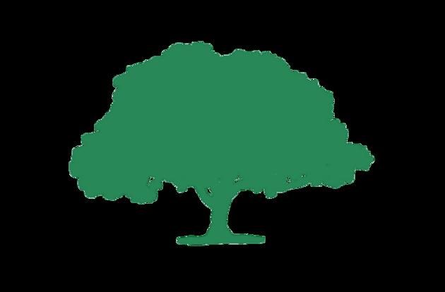 La grande quercia simbolo di Laudes